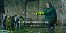 rex_film_king_ping (2)